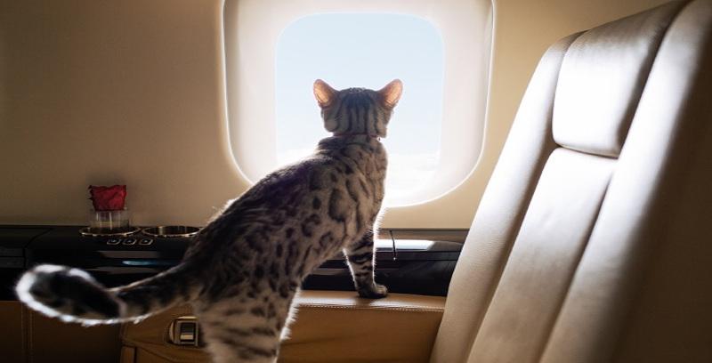 Terbang bersama haiwan peliharaan dengan VistaJet
