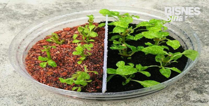 Vermikultur cepatkan proses kompos sisa organik