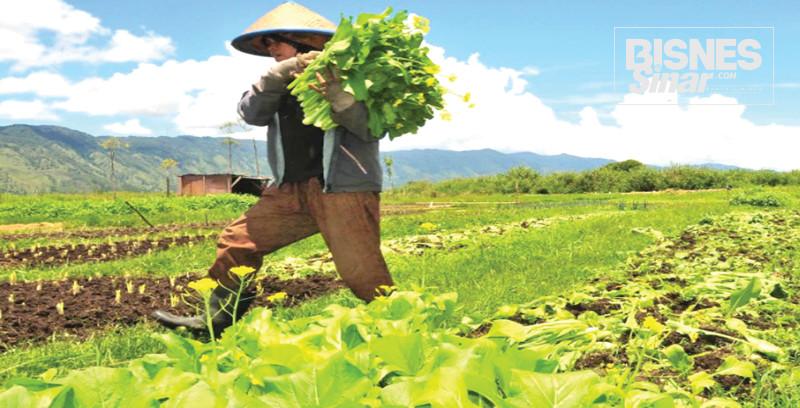 Negara perlukan reformasi tanah terbiar