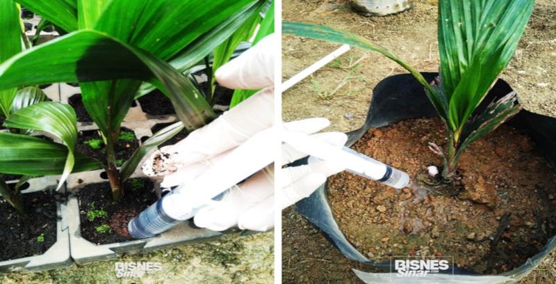 Teknologi nanoderma sebagai rawatan Ganoderma penyakit kritikal kelapa sawit