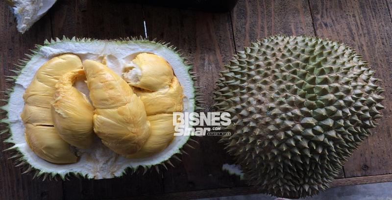 Pasaran durian kekal kukuh
